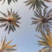 KEEP KALM. IT'S MONDAY. . . #palmtreelove #palmtreesunset #sunsetgram #summerfashion #summervibes☀️ #zachódsłońca #puestadesol #summervibes #lato #wakacje2021 #wakacjenadmorzem #palma #palmademallorca #verano2021 #vacanza #sunsetphoto #sunsetphotography #mallorcaisland #mallorcagram #mallorcaparadise #mallorcastyle #mallorcalife #july2021 #poniedziałek #beautifuldestinations #islasbaleares #igersbaleares #islandlife #mondayevening